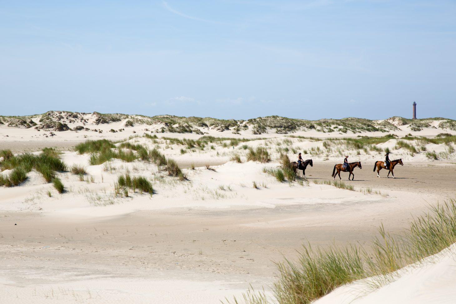 Reiter in den Dnen von Norderney